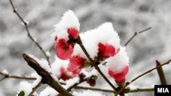 Густой снег повалил в Абхазии 28 декабря 1910 года и шел с короткими перерывами почти всю зиму 1911-го