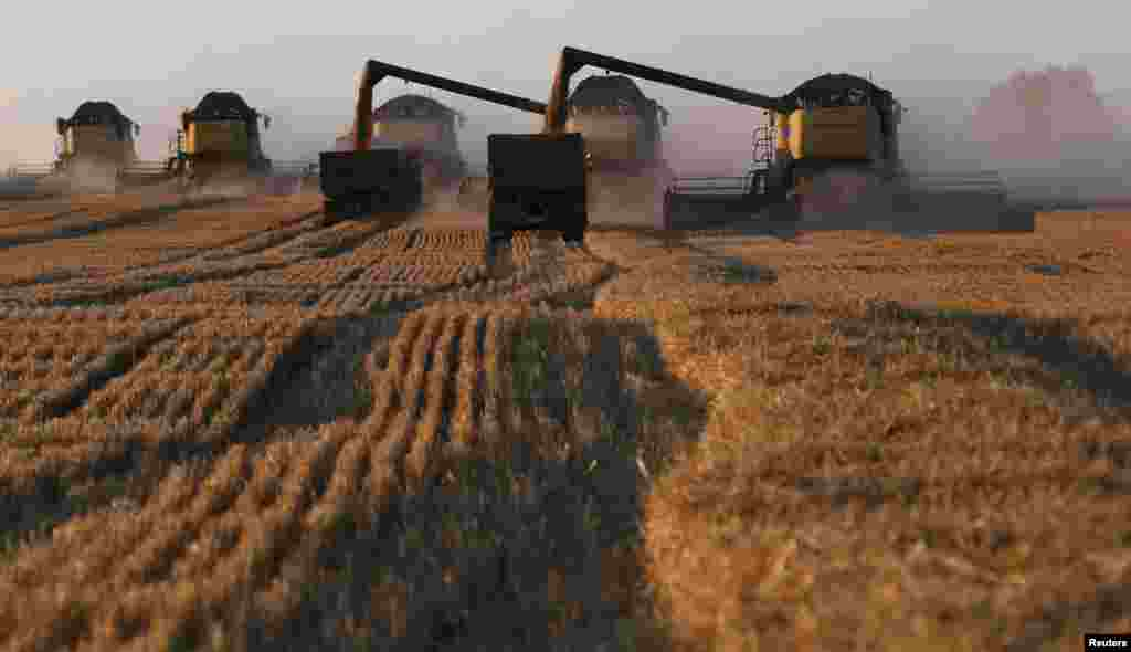 Harvesters work on a wheat field near the village of Talniki, southwest of the Siberian city of Krasnoyarsk. Russia, one of the world's top wheat exporters, will harvest its third-largest grain crop in post-Soviet history this year, reports said. (Reuters/Ilya Naymushin)