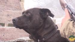 «Гілки позастрягали у легенях і м'язах»: історія врятованого пса-ветерана, який 5 років боронить Донбас