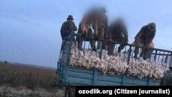 Өзбекстан қарулы күштері сарбаздары мақта тиелген трактор тіркемесінің үстінде тұр. 2019 жыл.