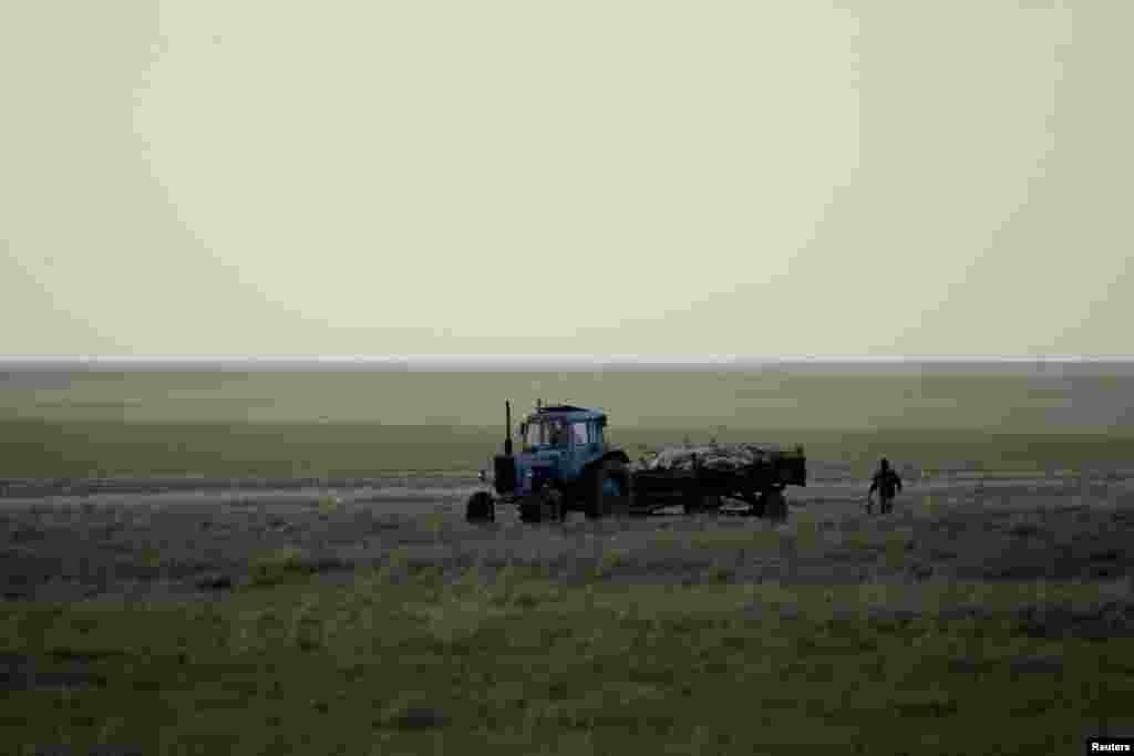 A tractor transports the carcasses of dead saiga in a field in the Qostanai region of northern Kazakhstan on May 20, 2015.