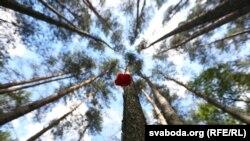 Ружа ў лесе на месцы канцэнтрацыйнага лягеру «Трасьцянец», архіўнае фота