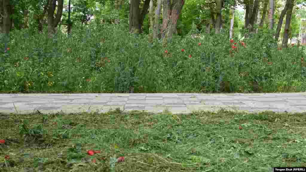 Траву в парке только-только начали косить