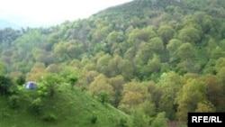 Milyard ağac kampaniyası başlayandan 75 min ağac əkilib