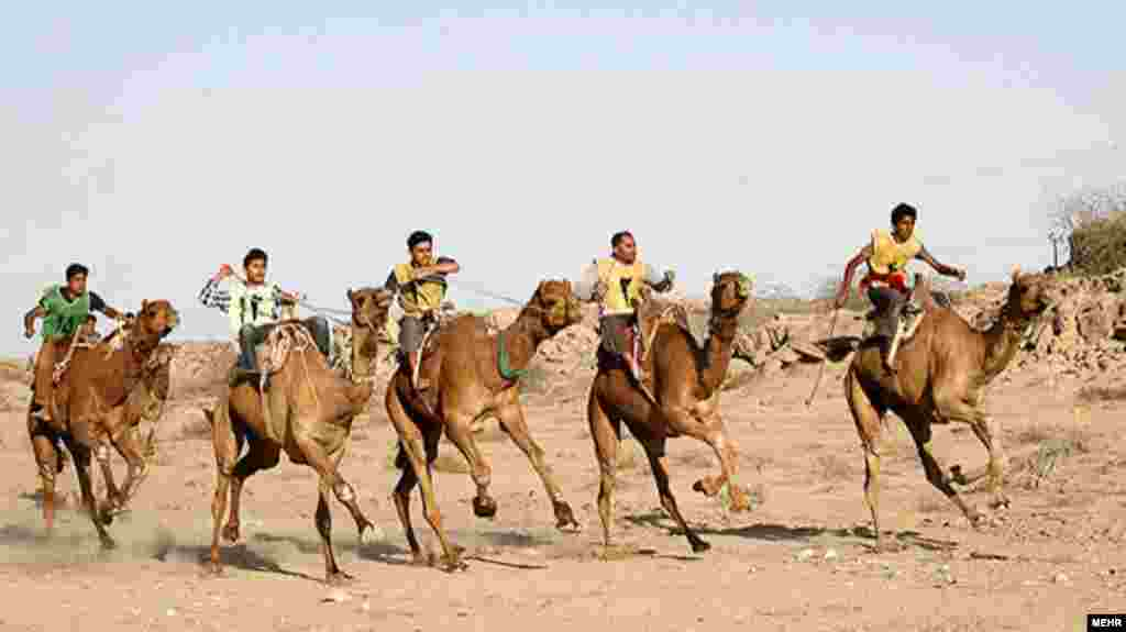 Young boys take part in a camel-racing competition in the southern Iranian city of Bandar Abbas on February 7. (MEHR NEWS/Ahmad Jafari)