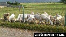 Farma koza