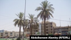 Baghdad authorities had hoped to use a belt of palm trees to protect the Iraqi capital from the impact of dust storms.