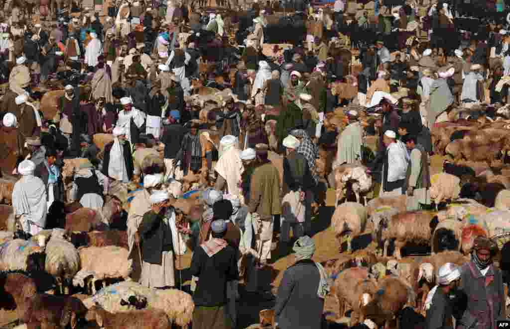 A busy Eid livestock market on the outskirts of Herat, Afghanistan.