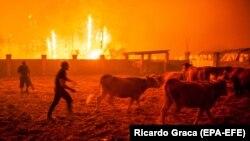 Incendiu în Vieira de Leiria, Portugalia, octombrie 2017