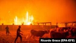 Лесной пожар в Португалии (Марина-Гранде, 16 октября 2017 г.)