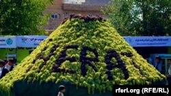 آرشیف، انگور هرات