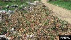 Земјоделски површини
