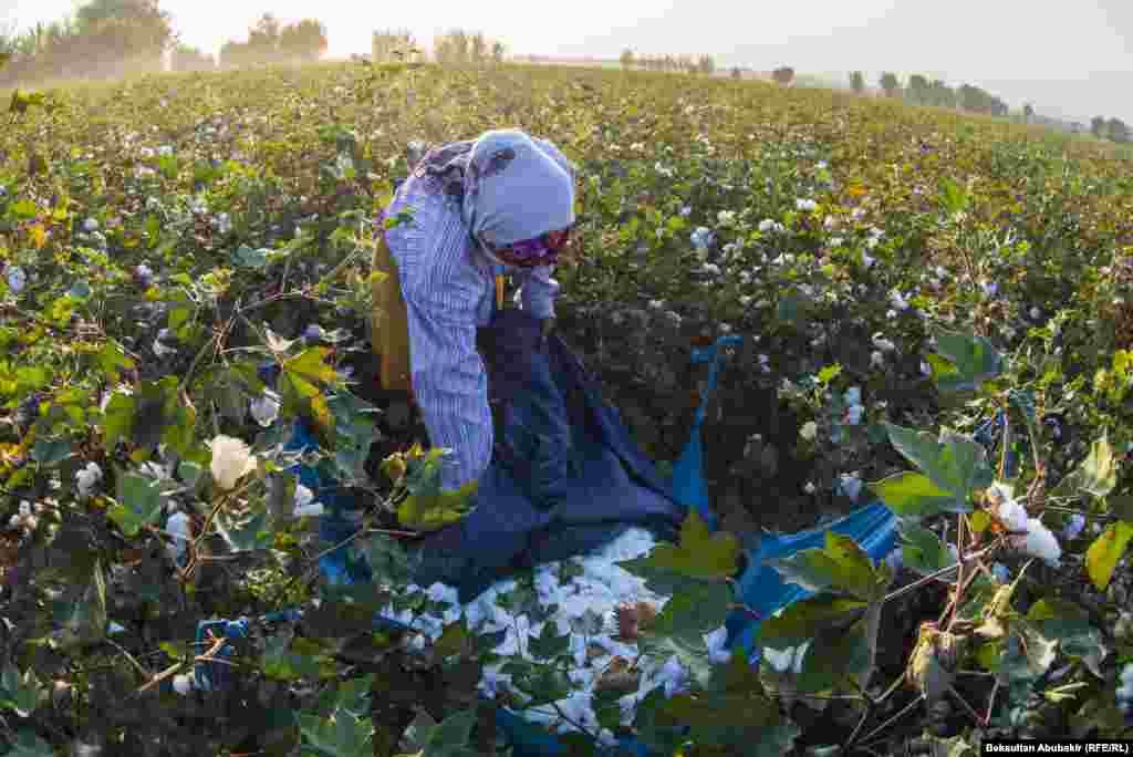 Хлопок собирают руками. Пять-шесть женщин могут собрать хлопок с гектара за два дня.