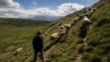 Borjan Bajle, 13, a shepherd from the Balje family, watches a flock of sheep graze in a pasture on Kosovo's Sharr Mountains.