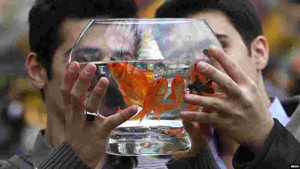 Iran -- Goldfish are among the traditional items for sale to celebrate Persian New Year, or Noruz (Norouz), Tehran, 16Mar2012