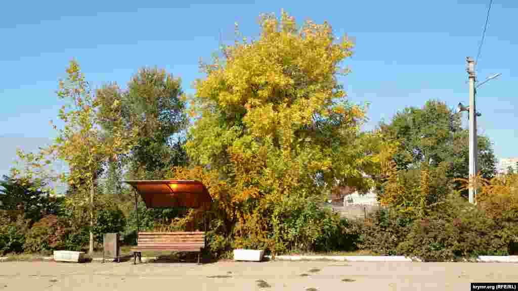 В сквере возле монумента Славы дерево совсем покрылось позолотой