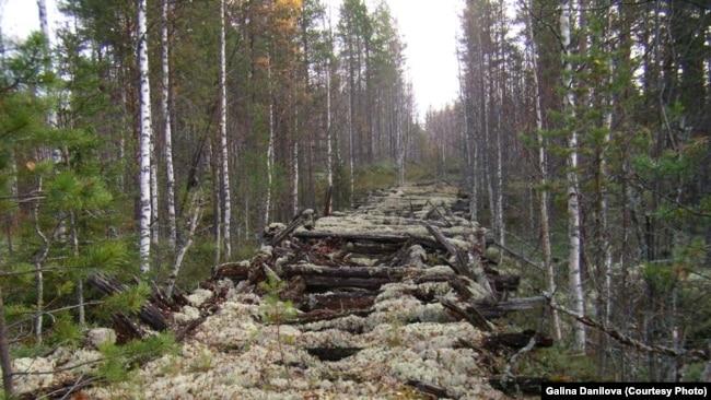 Лежневка - дорога, по которой спецпоселенцы возили бревна