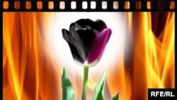 Тюльпан - символ финансовой спекуляции