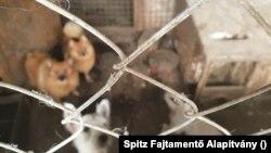Kutyák a karcagi illegális szaporítótelepen, 2020. szeptember 23-án