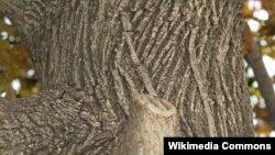 بر اساس تحقیقات، لغت پوسته درخت (bark) در میان دستکم چهار زبان مورد مطالعه دارای ریشه یکسان بوده است.