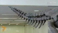 Аргентинада динозаврнинг янги тури топилди