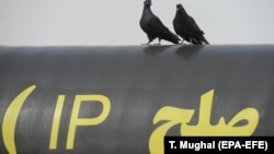 Birds sit on a gas pipeline with 'Peace' written in Persian during the inauguration ceremony of a gas pipeline in the city of Chabahar, south-western Sistan-Beluchistan province, March 11, 2013