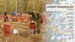 Türkmen migrantlarynyň arzuwlary