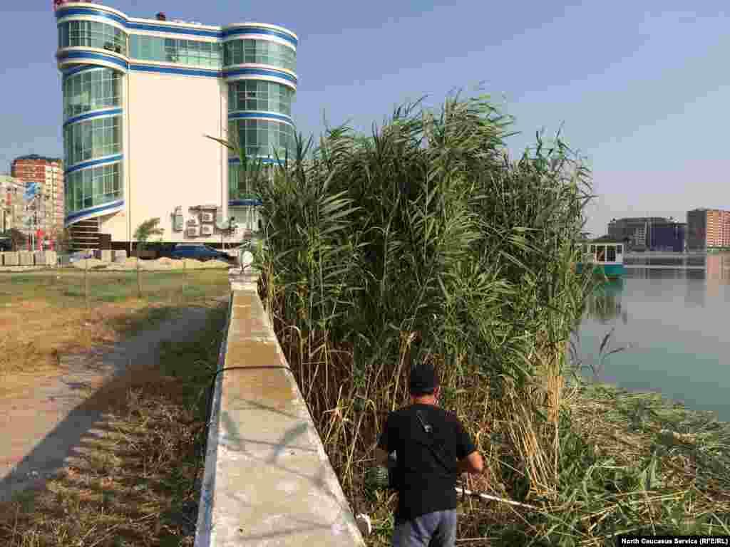 Сотрудник близлежащего ресторана косит камыш вдоль берега, чтобы придать окружающей территории эстетичный вид