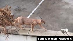 """Животното е забелязано зад хотел """"Марица"""" в Пловдив. Според потребители на фейсбук то има собственичка, която вече го е прибрала."""