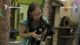 В котокафе Красноярска животных можно забрать себе домой