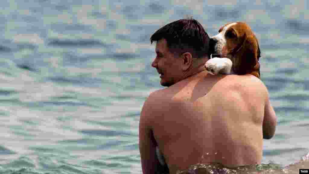 На берегу Черного моря в поселке Рыбачьем, что на юго-востоке полуострова, отдыхающий со своим верным другом купаются в море