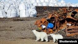 Neželjene posljedice od globalnog zatopljavanja već se uočavaju