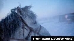 Лошади наподалеку от якутской деревни Томтор