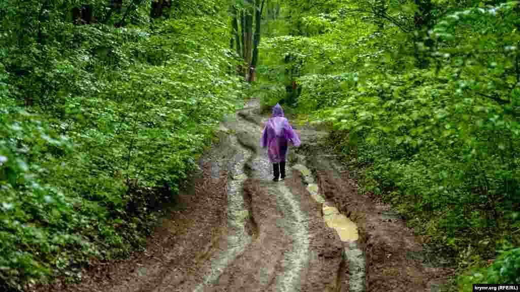 І лісовими дорогами вниз попрямували дощові потоки
