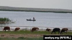 Аральский район в Кызылординской области. Иллюстративное фото.