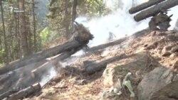 Как тушат пожар в Абастуманском лесу