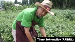 Манар-ата на своей онлайн-ферме, село Бирдик, Чуйская область, Кыргызстан.