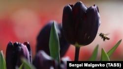 Все палитры цветов – тюльпаны в Никитском ботсаду (фотогалерея)