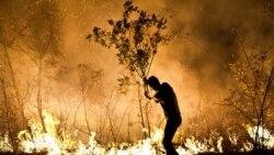۲۱ هزار هکتار از جنگلهای ایران در سال ۱۳۹۹ دچار آتشسوزی شد