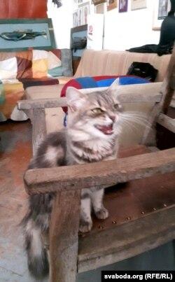 Котка, якая жыве ў майстэрні мастака