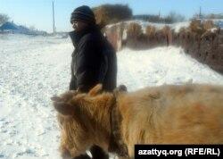 Өгіз жегіп, қамыс шабуға кетіп бара жатқан ауыл тұрғыны. Ақтөбе облысы, 19 ақпан 2012 жыл. (Көрнекі сурет)