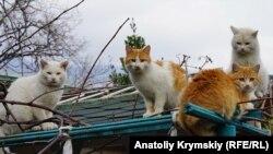 «Мертвый» сезон крымского Кацивели (фотогалерея)