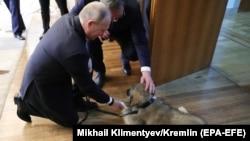Vladimir Putin mîngîind un cîine ciobănesc ce i-a fost oferit de omologul său sîrb la Belgrad, 17 ianuarie 2019