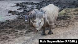 გადარჩენილი ცხოველები ზოოპარკში