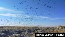 Полигон занимает площадь в несколько километров. Его нельзя не заметить, даже если не видишь: вонь идет такая, что першит в горле. Алматы, 4 декабря 2020 года.