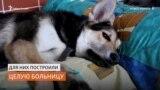 Волонтёры сами построили больницу для бездомных собак