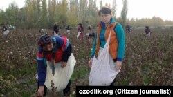 В Узбекистане системный принудительный труд, организованный государством, использовался при сборе хлопка.