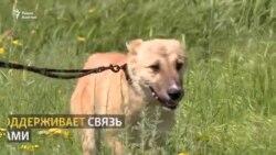 «Настоящий Баатыр»! Как спасали «кыргызского Хатико» и где он сейчас