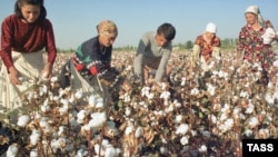 Cotton pickers in Uzbekistan (file photo)
