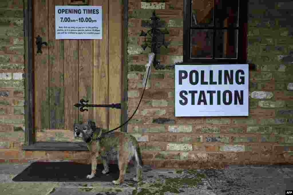 A dog waits as its owner casts their ballot paper in a polling station set up in the grounds of a private residence near Fleet, southwest of London, on June 23. (AFP/Adrian Dennis)